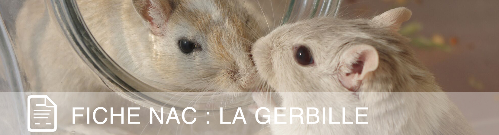 fiche-nac-gerbille
