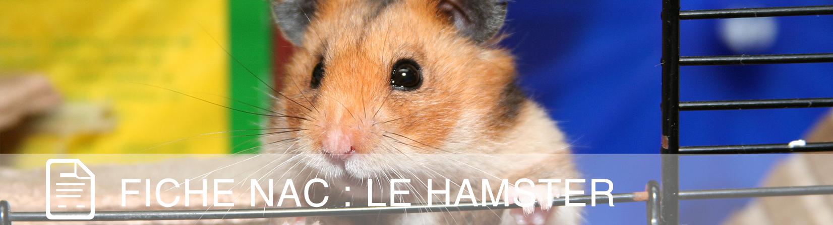 fiche-nac-hamster