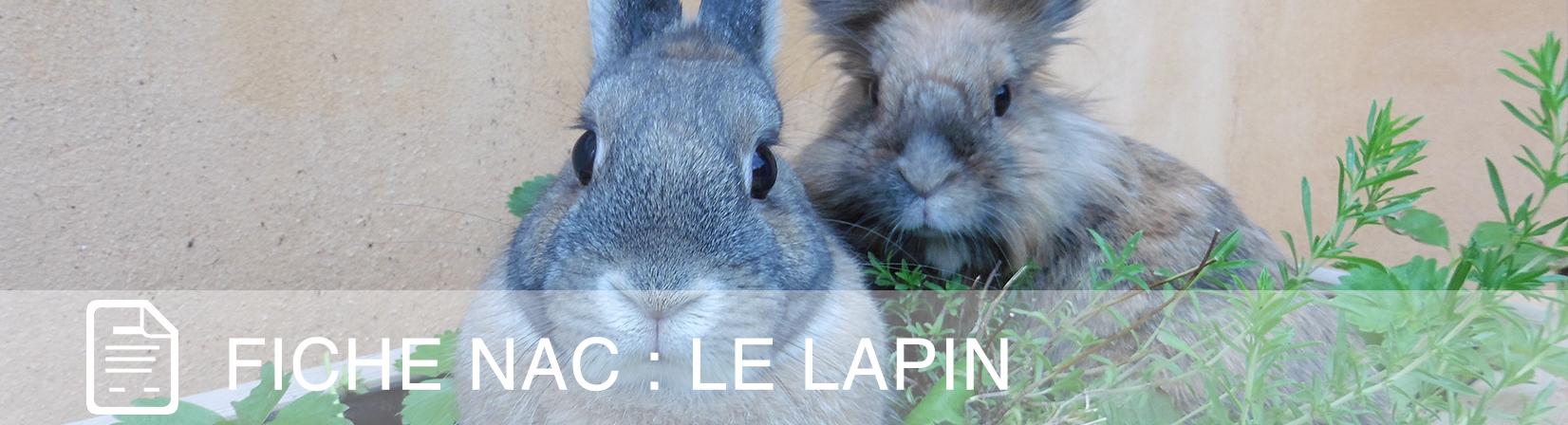 fiche-nac-lapin-1