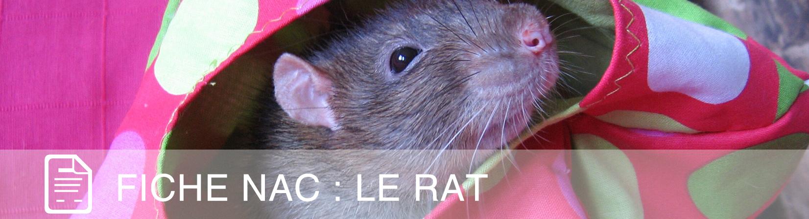 fiche-nac-rat