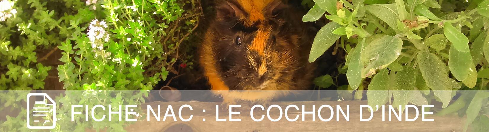 fiche-nac-chon