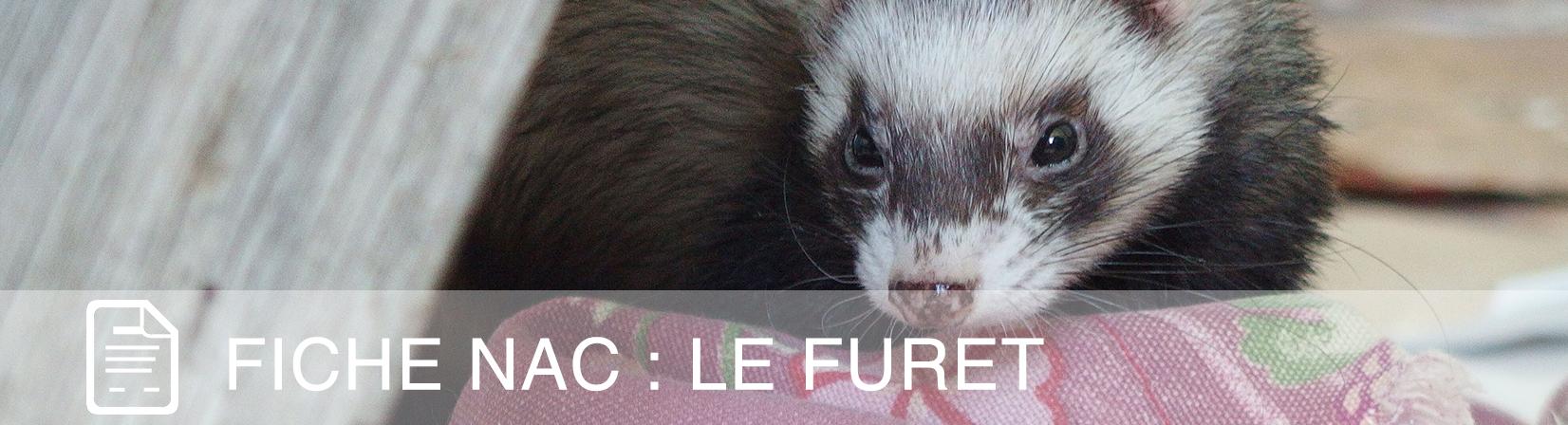 fiche-nac-furet